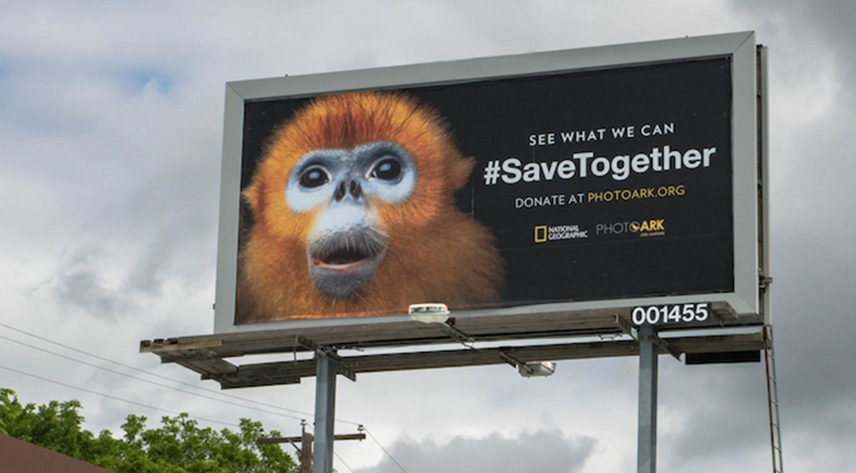 National Geographic & OAAA Members Launch Important OOH Campaign Across Major U.S. Cities On Endangered Species Day